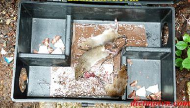 công ty diệt chuột hiệu quả