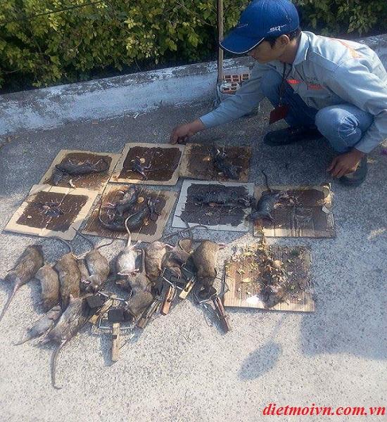Công ty diệt chuột uy tín