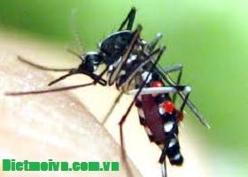 Phát hiện ca nhiễm dịch Virut Zika ở Long An