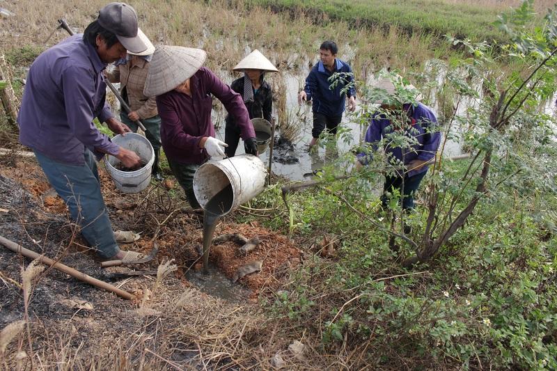 Dịch vụ diệt Chuột tại Tuyên Quang