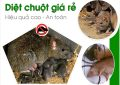 Dịch vụ diệt Chuột tại Điện Biên