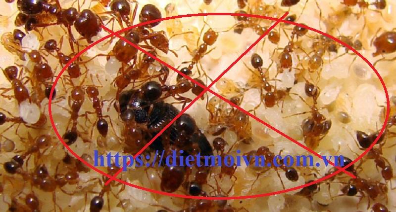 Đơn vị diệt kiến Đà Nẵng