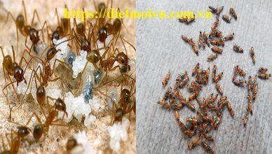 Đơn vị diệt kiến ba khoang Đồng Nai