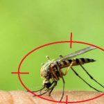 Đơn vị diệt muỗi tại Hà Nam