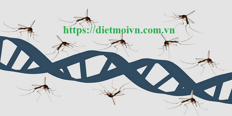 Đơn vị phun diệt muỗi Bắc Ninh