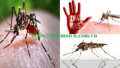Công ty diệt muỗi giá rẻ Đà Nẵng