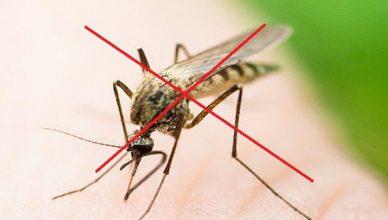 Dịch vụ diệt muỗi Hưng Yên