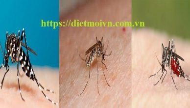 Dịch vụ diệt muỗi tận gốc Đồng Nai