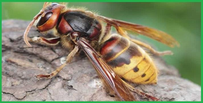Đội bắt ong chuyên nghiệp thủ đô Hà Nội
