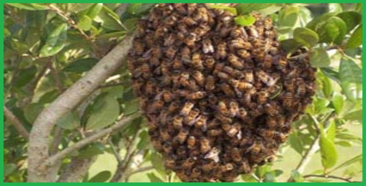 Công ty kiểm soát ong tại Cần Thơ