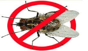 diệt ruồi nhặng tại Huyện Sóc Sơn
