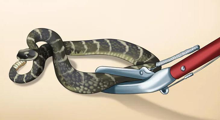 dịch vụ kiểm soát rắn tại Hà Nội