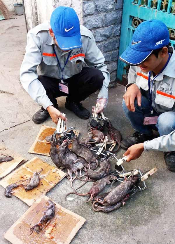 Dịch vụ đào tạo nhân viên diệt côn trùng