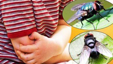 phun thuốc diệt ruồi tại Nam Định